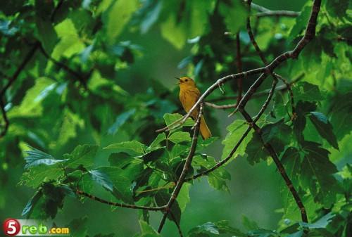 اجمل صور الطيور D2133a0b28