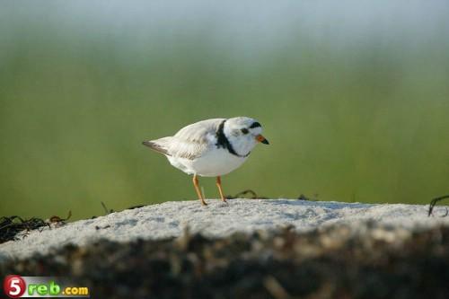 اجمل صور الطيور Ddae0b6473