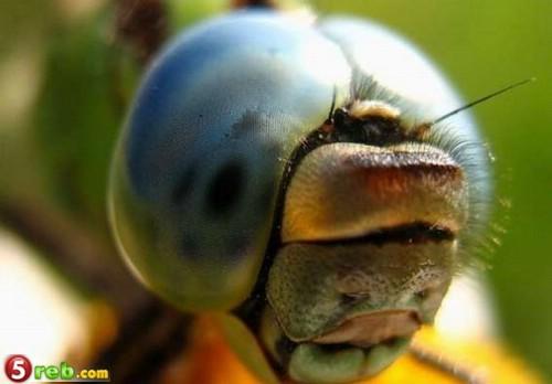 صور حشرات حلوة كتير 1221515550_119772