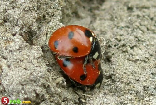 صور حشرات حلوة كتير 1221515576_119772_191467