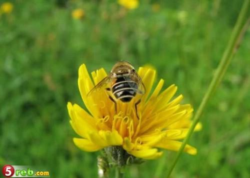 صور حشرات حلوة كتير 1221515653_119772_191466
