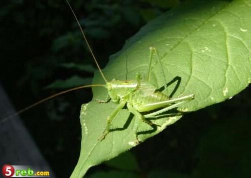 صور حشرات حلوة كتير 1221515668_119772_191478