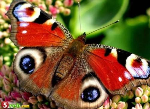 صور حشرات حلوة كتير 1221515698_119772_191475