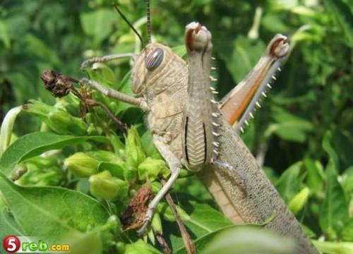 صور حشرات حلوة كتير 1221515733_119772_191476