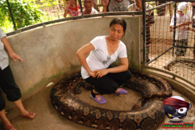 صور البنت اللي تحدى الثعابين وصور غريبة 2011 66a66-21a2dc2e8d