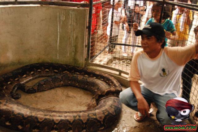 صور البنت اللي تحدى الثعابين وصور غريبة 2011 66a66-31a4125e63