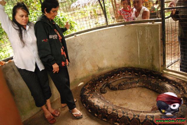 صور البنت اللي تحدى الثعابين وصور غريبة 2011 66a66-720d7f2c50