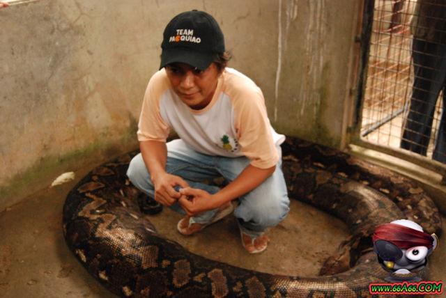 صور البنت اللي تحدى الثعابين وصور غريبة 2011 66a66-ad9545d207