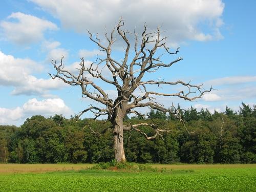 Bilo jednom jedno drvo Lonely%20Tree