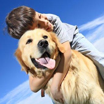 Как собаки излечивают от аутизма. 72f89438d2e9080cb78649f1f028bc3c