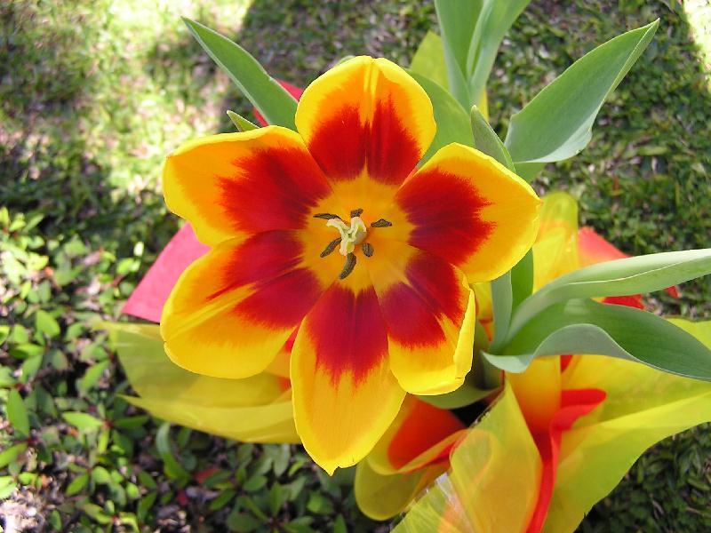 Cvetna oaza - Page 6 Flores27