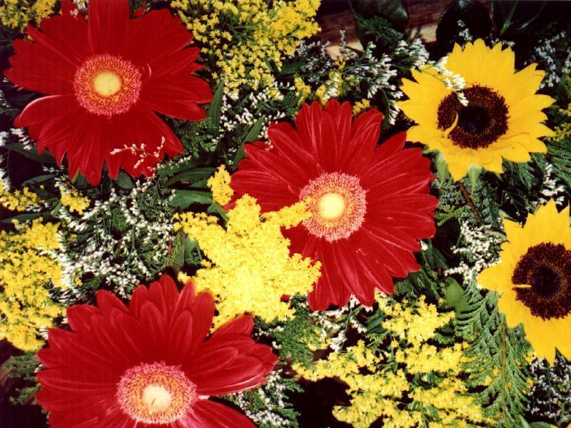 Cvetna oaza - Page 5 Flores5