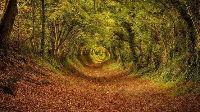 Un recorrido por nuestro planeta: asombrosas imagenes. - Página 3 Halnaker-England--644x362