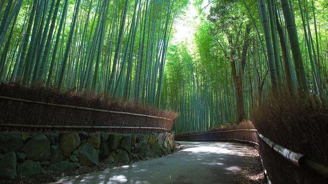 Un recorrido por nuestro planeta: asombrosas imagenes. - Página 3 Sagano-Bamboo-Forest--644x362