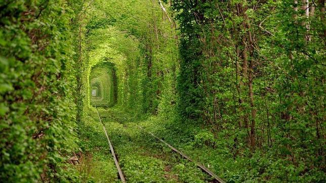 Un recorrido por nuestro planeta: asombrosas imagenes. - Página 3 Tunel-amor-ucrania1--644x362