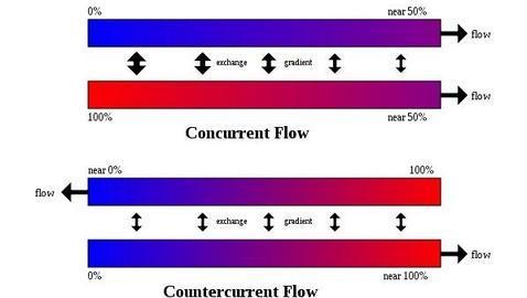 Descubierto el primer pez de sangre caliente Sistema-circulacion-contracorriente--478x270