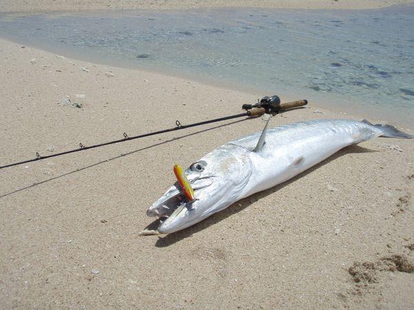 La Pesca de la Barracuda por José Manuel López Pinto R209401_802117
