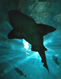 les Abusrdités d'Evolution : Humour Shark300507