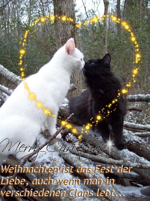 Wolfsheulen Adventskalenderwcl7kzde