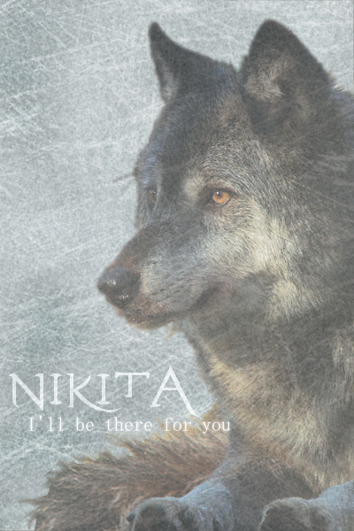 Wolfsheulen Nikita_ava01l0v