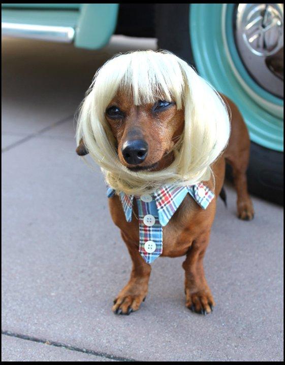 Parrucche per cani 26ee3b1c-f140-408c-97de-14f2fe88163e_BN_PetWigs_05