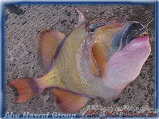 أغرب الصور والعجائب ولله في خلقه شوؤن Fish-2