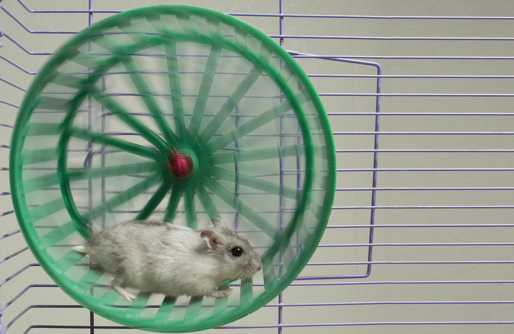CENSURA - Pagina 2 Hamster-Wheel-1000x650