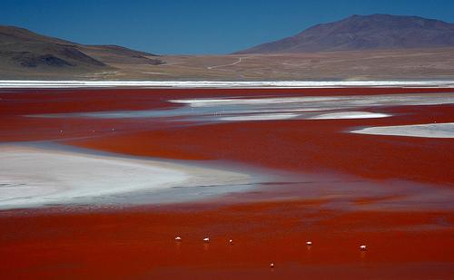 Jezera Laguna-kolorada-jezero