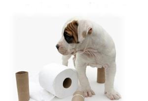 Как приучить щенка к туалету дома. 1234