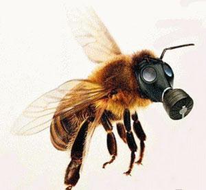 المبيدات الحشرية تصيب النحل بالجنون AkhbarAlBi2a_d1fbae24-bfbb-45d8-83af-8f3085167fc4_