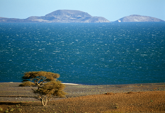 Jezera - Page 3 Lake-Turkana-acacia-tree