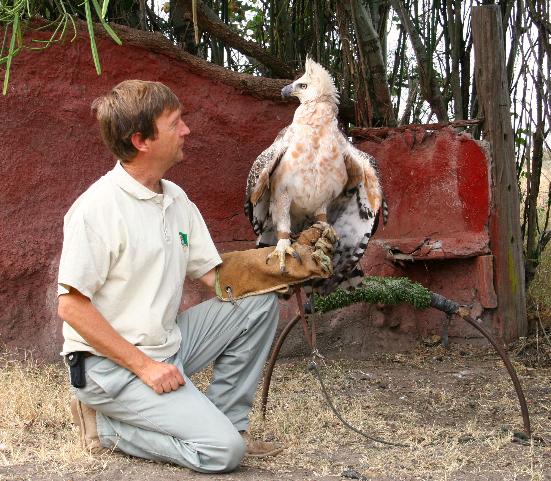 Comparação do tamanho de águias  com relação ao homem. SIMOIMG_7778