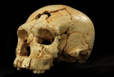 Los homínidos de Atapuerca pudieron relacionarse con los Denisova. [Historia] Craneos-de-Atapuerca-con-rasgos-neandertales-y-primitivos-iluminan-la-evolucion-humana_image_380