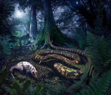 Las serpientes primitivas, depredadoras nocturnas y con patas Que-forma-tenian-las-primeras-serpientes_image_380