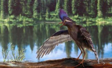 Los antepasados de los pájaros vivieron hace 130 millones de años Los-antepasados-de-los-pajaros-vivieron-hace-130-millones-de-anos_image_380