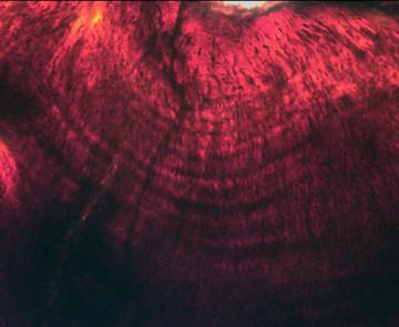 Los huevos de los dinosaurios tardaban hasta seis meses en eclosionar 170102_lineasdientesdinos_GM.-Erickson_large