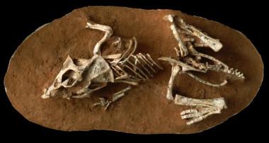 Los huevos de los dinosaurios tardaban hasta seis meses en eclosionar Los-huevos-de-los-dinosaurios-tardaban-hasta-seis-meses-en-eclosionar_image_380