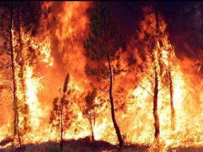 Espero y espero, esperando al paraiso, espero - Página 2 Incendios-causas-naturales-y-predicciones