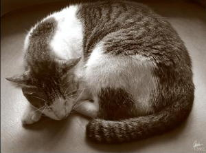 Castora invita - Página 2 Cat7
