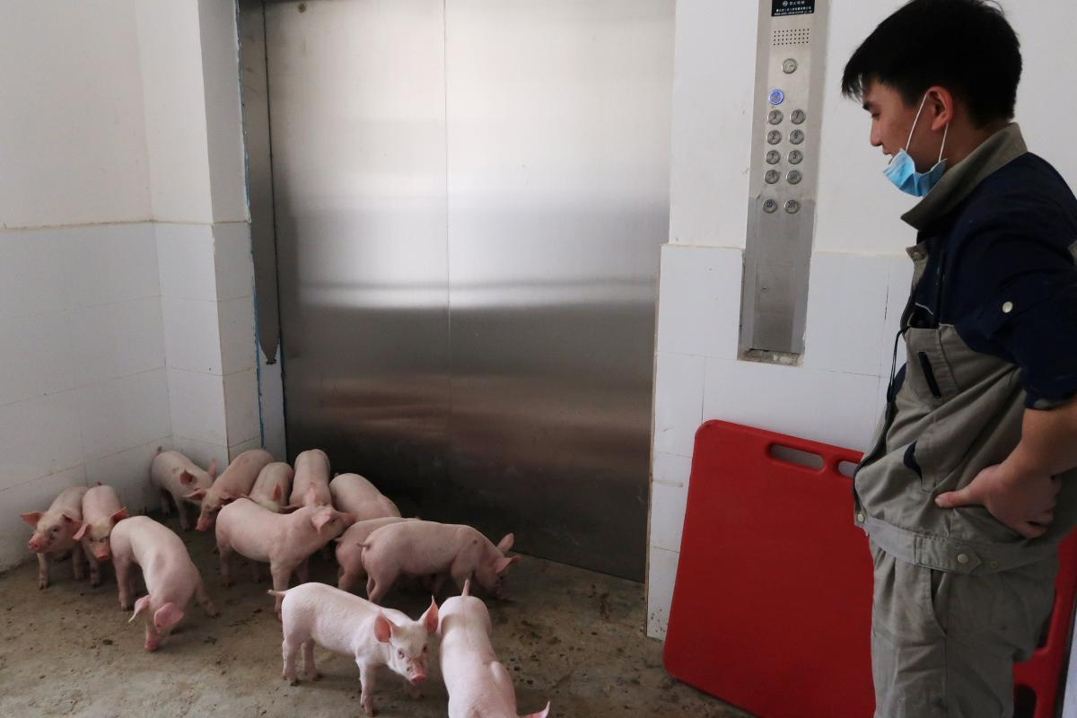 Des immeubles pour les cochons en Chine Af6c5c7182b9e34ae51e1348c72b3e590abef63b