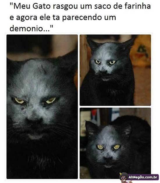 Tirinhas memes - Página 5 Gato