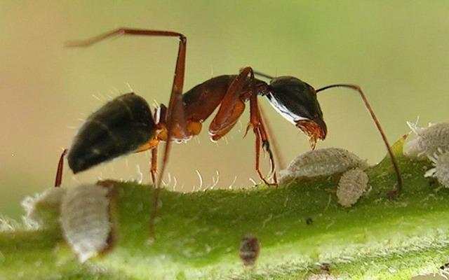 النمل وأسراره التي لا تصدق  Ant1