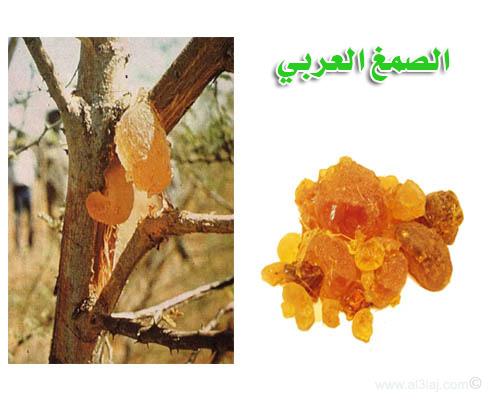 مميزات الصمغ العربي Gum-Arabic