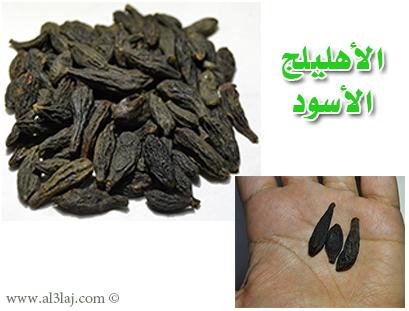 عشبة الإهليلج الأسود Small-black-myrobalan