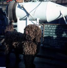 Aviez-vous une mascotte (chien ou autre) à bord ? - Page 3 Vignetteverseau-dragueurcotier2302