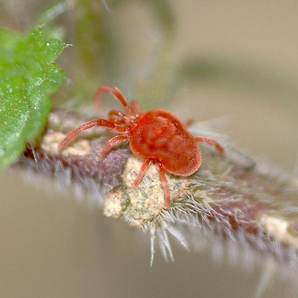 أخطر أنواع العناكب في العالم  Uuu
