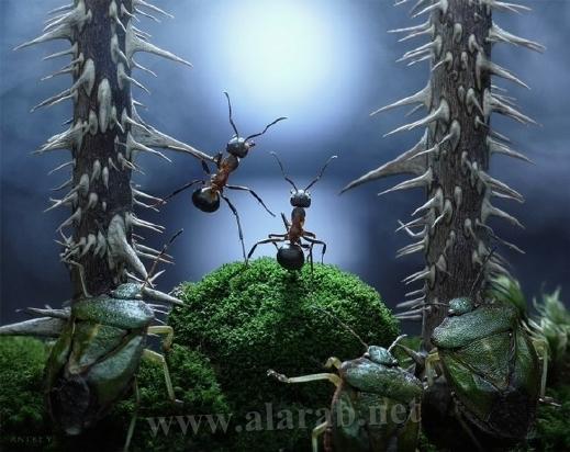 30 صورة مذهلة لعالم النمل من إبداع المصور أندريه بافلوف 20120405112326alarab_040412_232