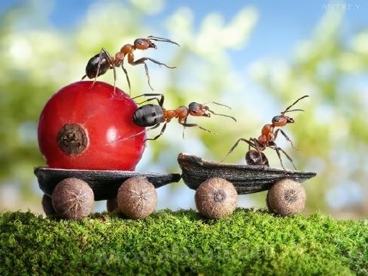 30 صورة مذهلة لعالم النمل من إبداع المصور أندريه بافلوف 20120405112327alarab_040412_229