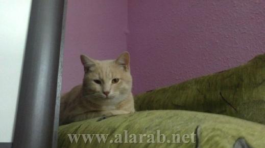 شاهدوا بالصور: غرف نوم فاخرة للحيوانات الأليفة 20120526180214alarab_110512_930