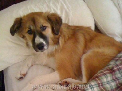 شاهدوا بالصور: غرف نوم فاخرة للحيوانات الأليفة 20120526180214alarab_110512_931